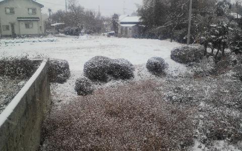 アパートの裏庭の雪