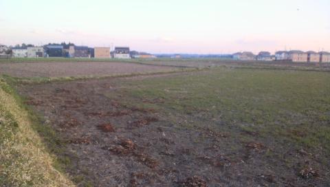 こだわり栽培と慣行栽培のほ場